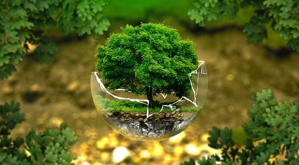 Environmental Science Degree Programs in the USA
