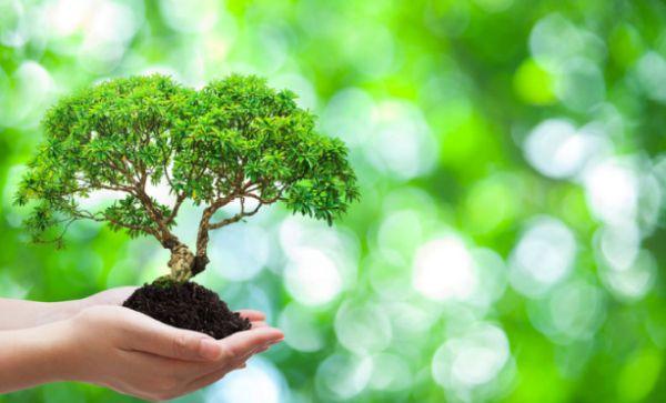 Top Environmental Science Scholarships