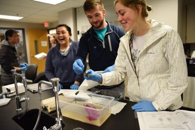 Top Universities to Study Neuroscience Program