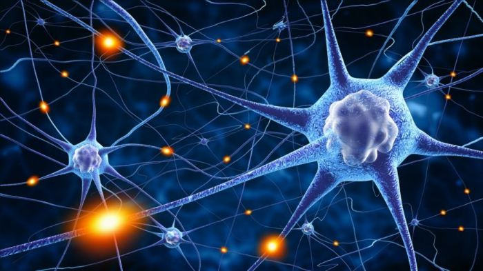 Top Neuroscience Graduate Programs Worldwide