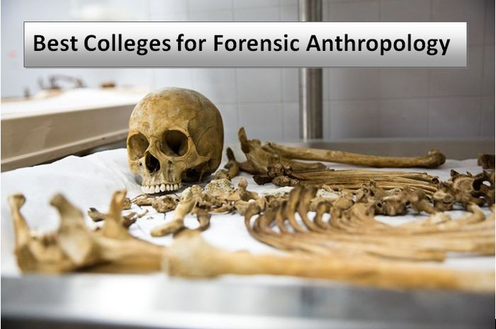 Best Colleges for Forensic Anthropology