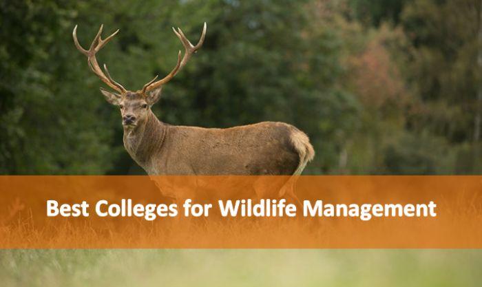 Best Colleges for Wildlife Management 2018-19