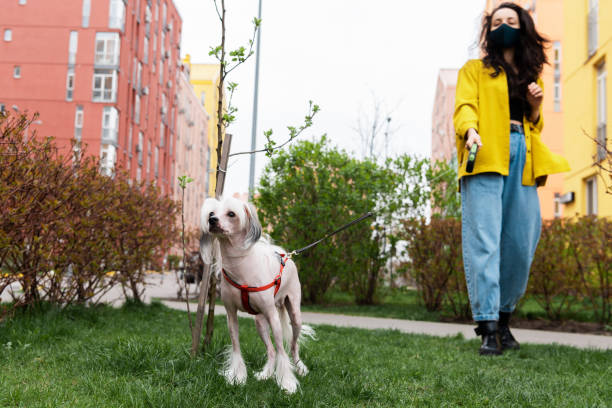 Best Dogs for College Students