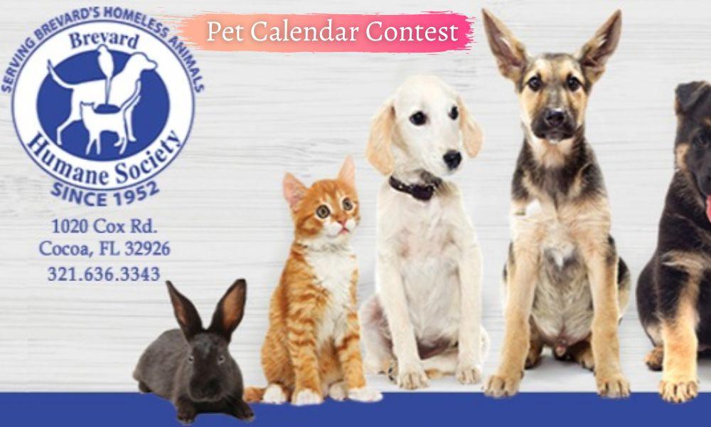 Pet Calendar Contest 2022