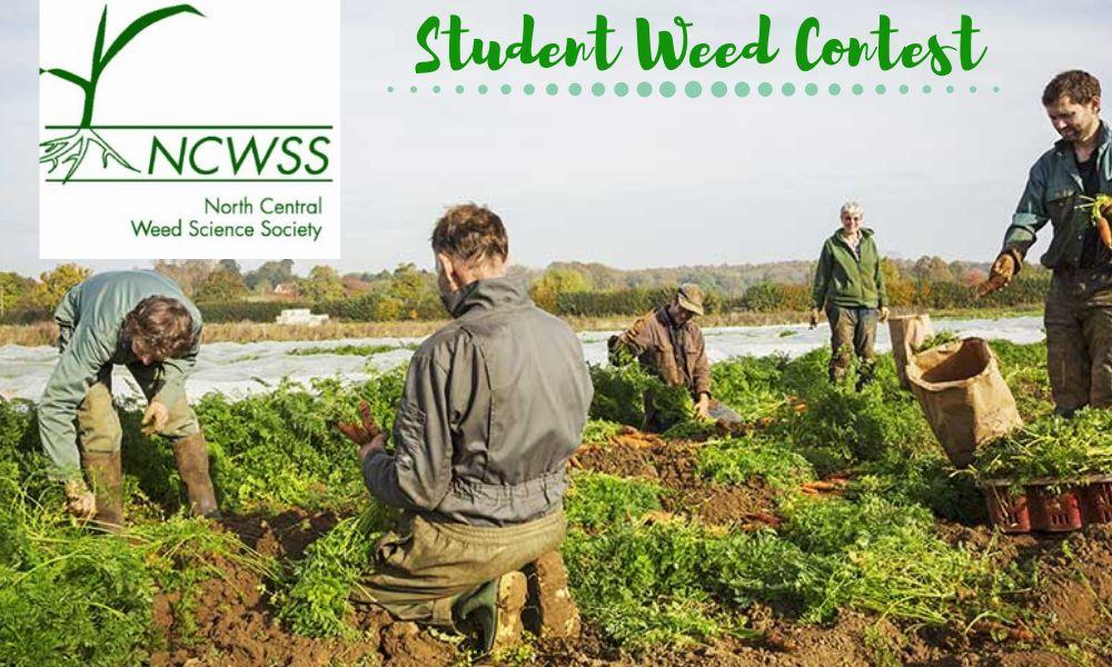 Student Weed Contest for Undergraduates and Graduates