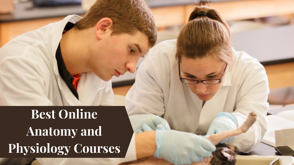Best Online Anatomy and Physiology Courses