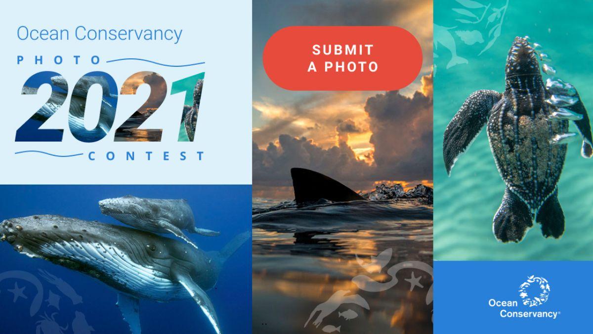 Ocean Conservancy Annual Photo Contest