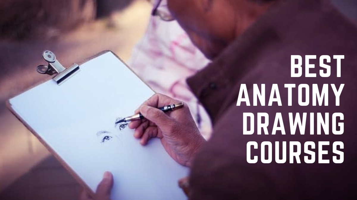 Best Anatomy Drawing Courses