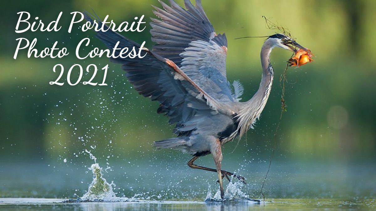 Bird Portrait Photo Contest 2021
