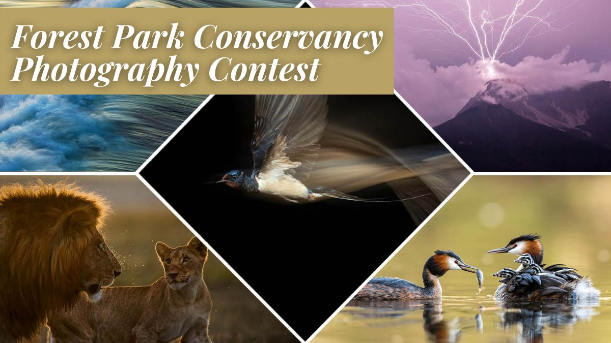 Forest Park Conservancy Photography Contest