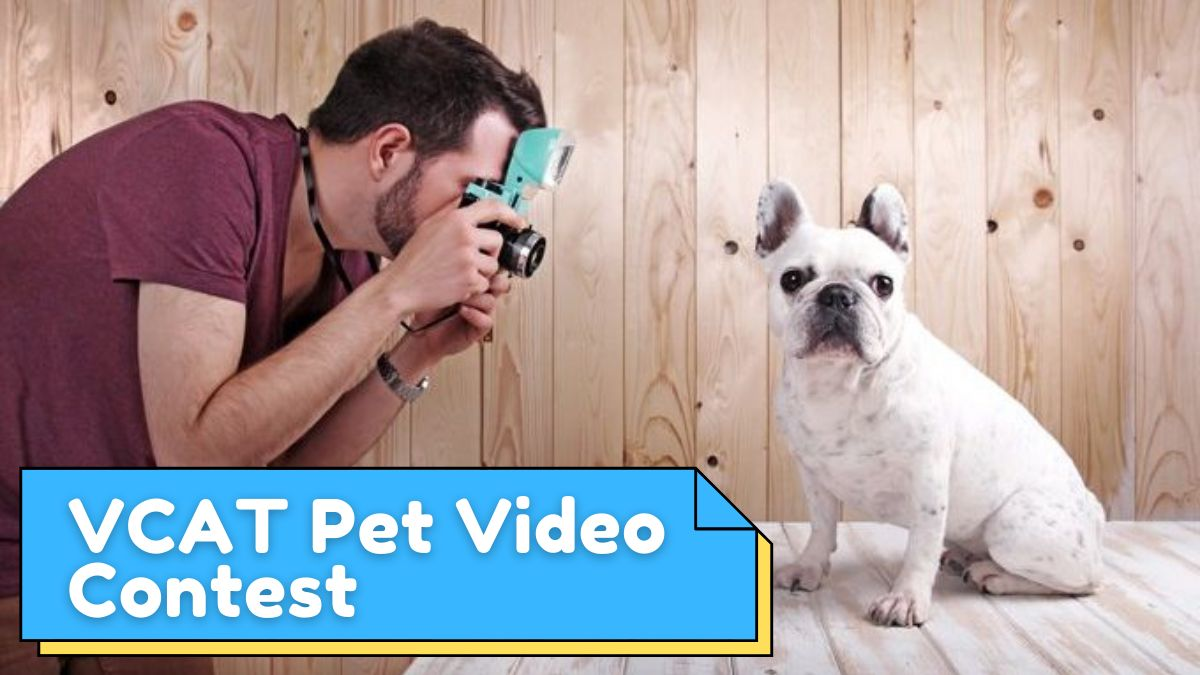 Vallejo Access Community Television Pet Video Contest