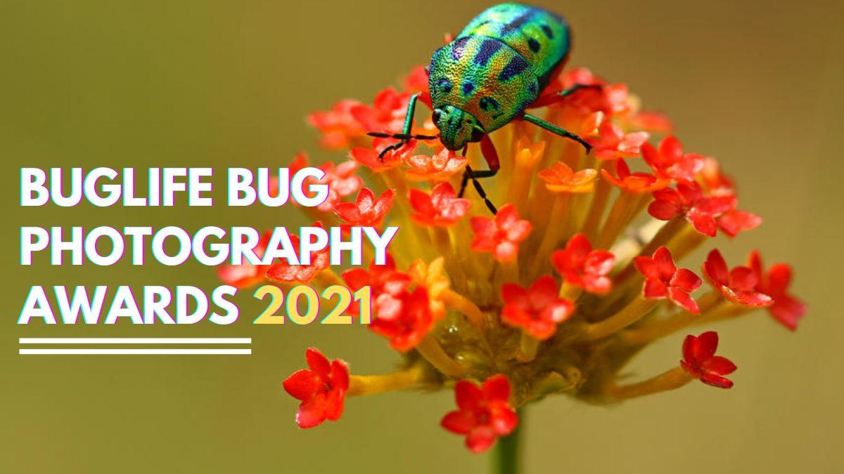 Photocrowd Buglife Bug Photography Awards 2021