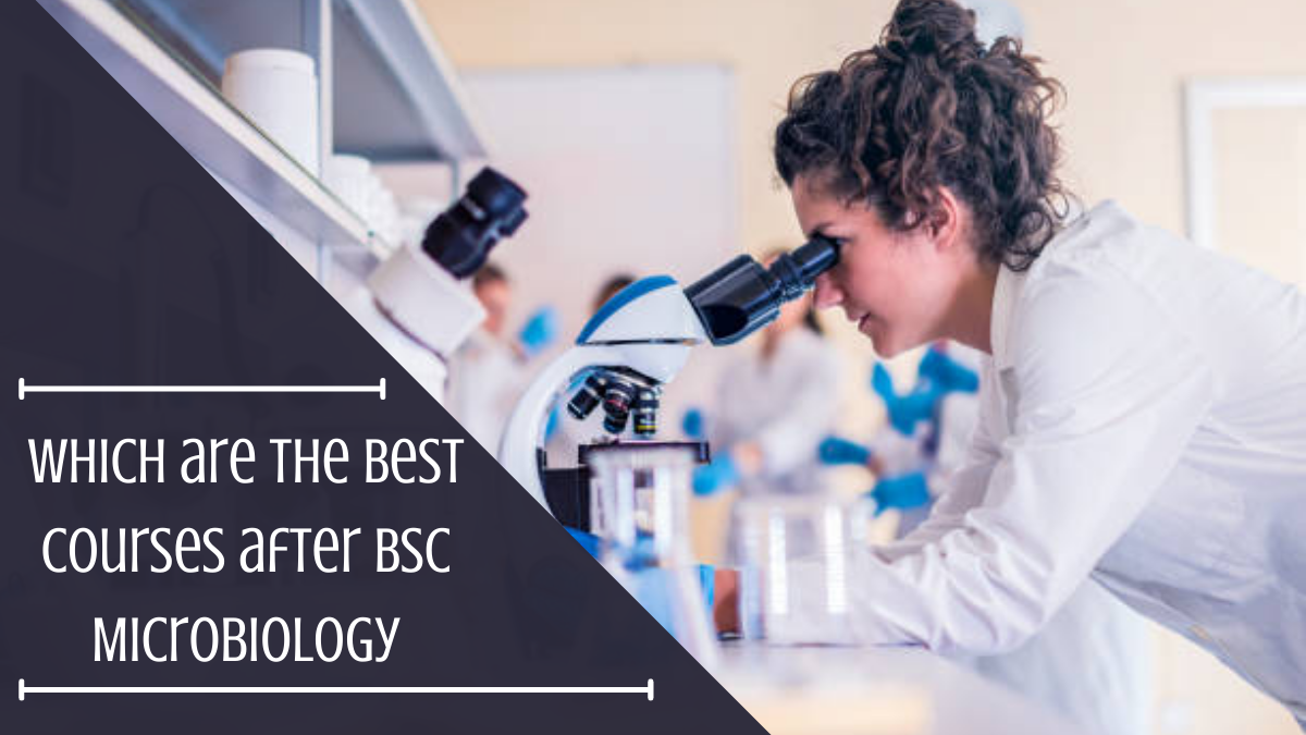 Which are the Best Courses after BSc Microbiology