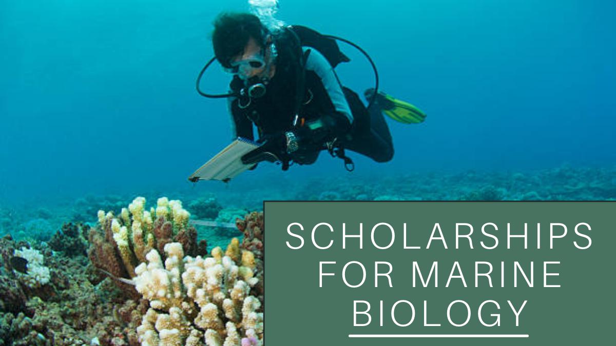 Scholarships for Marine Biology